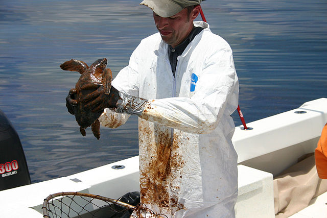 Turtle_Rescue_and_Rehabilitation.jpg