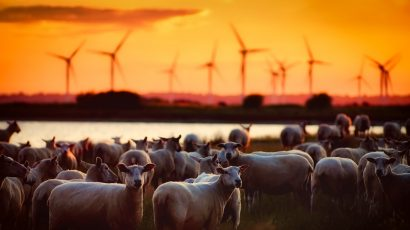 wind turbines, livestock, energy
