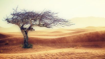 dead tree and desert