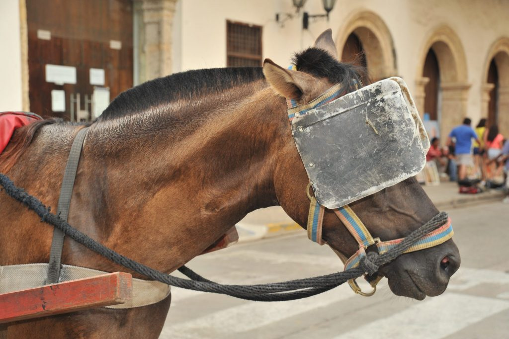A brown horse wearing very large blinders.